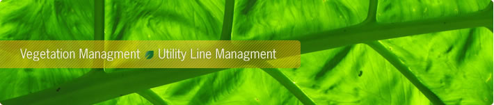 Vegetation Management Utility Line Management